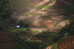 Terrasserat risfältlandskap nära Sapa i Vietnam Royaltyfria Foton