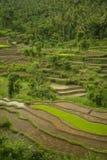 Terrasses colorées de riz de Bali Image stock