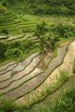Terrasses colorées de riz de Bali Photographie stock libre de droits