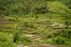 Terrasses colorées de riz de Bali Image libre de droits