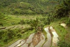 Terrasses colorées de riz de Bali Photo libre de droits