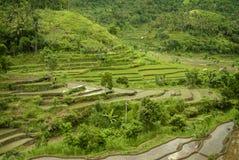 Terrasses colorées de riz de Bali Photos libres de droits