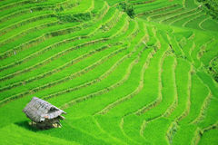 Terrasses de gisement de riz Image libre de droits