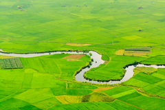 Terrasses de gisement de riz Photos stock