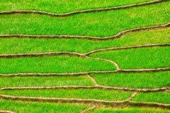 Terrasses de gisement de riz Photos libres de droits