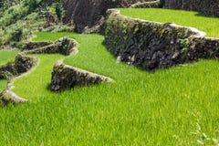 Terrasses de gisement de riz de Batad, province d'Ifugao, Banaue, Philippines images libres de droits