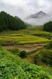 Terrasses de gisement de riz de village de Youtsuya, Japon Images libres de droits