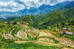 Terrasses de gisement de riz Près de Sapa, Mui Ne Images libres de droits