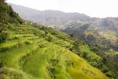 Terrasses de l'Himalaya de riz Images libres de droits