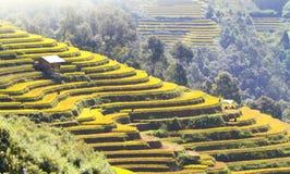 Terrasses 08 de la MU Cang Chai Image libre de droits