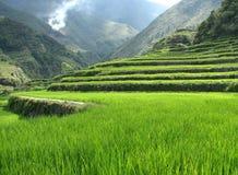 Terrasses de riz Photographie stock libre de droits