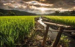Terrasses de riz images libres de droits