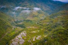 Terrasses de riz Image libre de droits