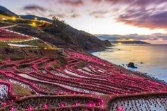 Terrasses de riz au Japon image libre de droits