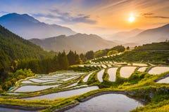 Terrasses de riz au Japon images libres de droits