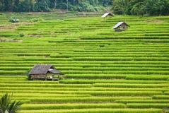 Terrasses de riz, chame de montant éligible maximum, Thaïlande Images libres de droits