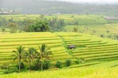 Terrasses de riz d'île de Bali, Indonésie Image libre de droits