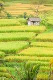 Terrasses de riz d'île de Bali, Indonésie Images libres de droits