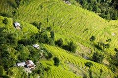 Terrasses de riz d'ofl de vue aérienne Photographie stock