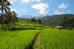 Terrasses de riz dans Bali image libre de droits