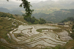 Terrasses de riz dans la PA proche de SA Photographie stock