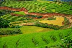 TERRASSES DE RIZ DANS SAPA, VIETNAM Photo libre de droits