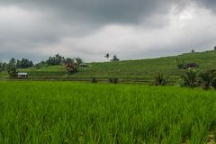 Terrasses de riz dans Tegallalang, Ubud, Bali, Indonésie Images stock