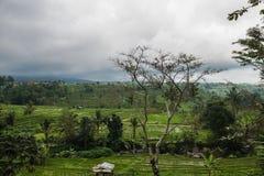 Terrasses de riz dans Tegallalang, Ubud, Bali, Indonésie Photos libres de droits