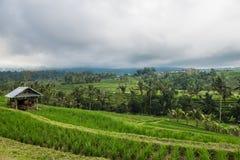 Terrasses de riz dans Tegallalang, Ubud, Bali, Indonésie Photographie stock libre de droits