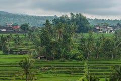 Terrasses de riz dans Tegallalang, Ubud, Bali, Indonésie Images libres de droits