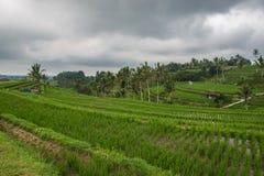 Terrasses de riz dans Tegallalang, Ubud, Bali, Indonésie Photo libre de droits