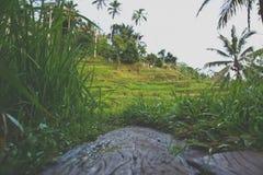 Terrasses de riz dans Ubud, Bali, Indonésie Image libre de droits