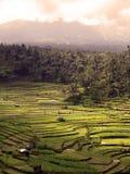 terrasses de riz de bali Images libres de droits