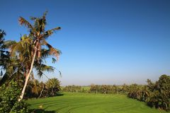 terrasses de riz de bali Photo stock