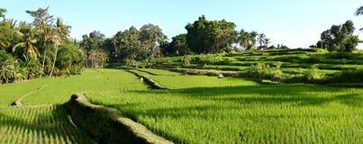 Terrasses de riz de Balinese Image libre de droits