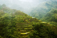 Terrasses de riz de Banaue Photo stock