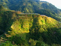 Terrasses de riz de Banaue Photographie stock