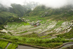 Terrasses de riz de Batad Image stock