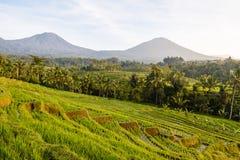Terrasses de riz de Jatiluwih photographie stock