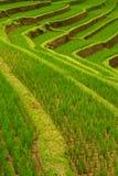 Terrasses de riz de Jatiluwih, Bali Images libres de droits