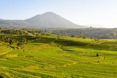 Terrasses de riz de Jatiluwih, Bali image stock