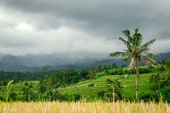 Terrasses de riz de Jatiluwih - Bali Image stock