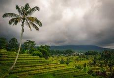 Terrasses de riz de Jatiluwih - Bali Photos stock