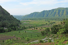 Terrasses 04 de riz de Karangasem Images stock