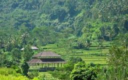 Terrasses 05 de riz de Karangasem Photographie stock libre de droits