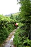 Terrasses de riz de Longsheng, Guilin Images libres de droits