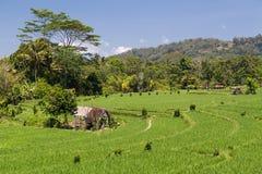 Terrasses de riz de pays dans Bali, Indonésie Images libres de droits
