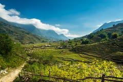 Terrasses de riz de Sapa Images stock