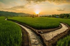 Terrasses de riz en Thaïlande Photographie stock