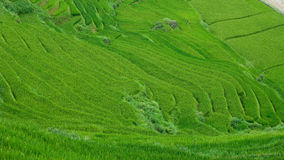 Terrasses de riz en vallée de Sapa, Vietnam Photos libres de droits